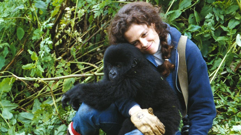 Gorillas-in-the-Mist-DI
